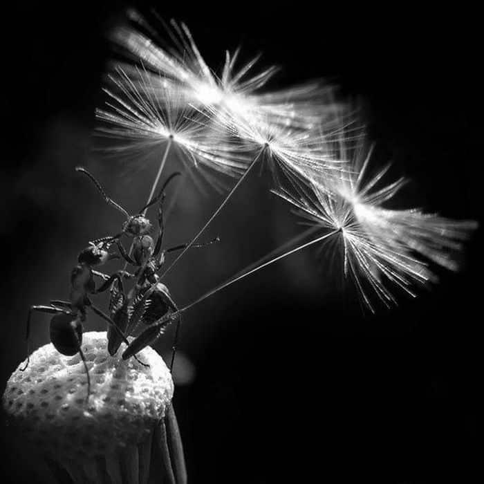 Совместный проект Российского Гомеопатического Общества и Издательства Гомеопатическая Книга Марии Сокольской